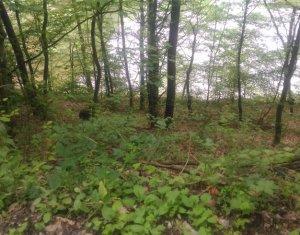 Land for sale in Tarnita