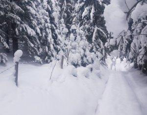 Vanzare teren 3403 mp  in zona Belis
