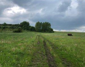 Land for sale in Cluj Napoca, zone Baciu