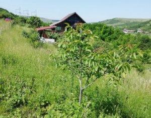 Cabana, teren cu pomi roditori, 5600 mp - Caianu