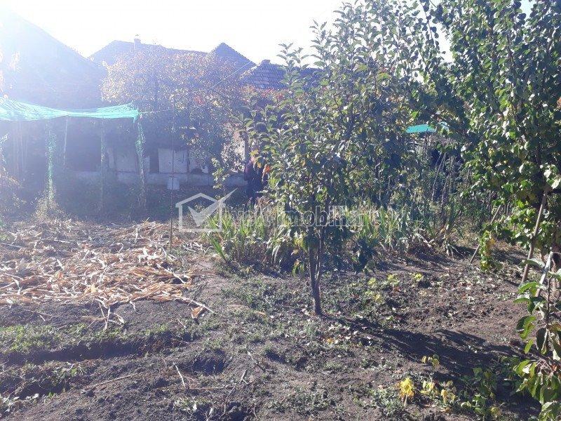 Vanzare casa individuala in Gruia cu teren mare de 850mp