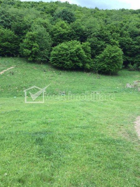 Vanzare teren 1300 mp, zona de case, langa padure